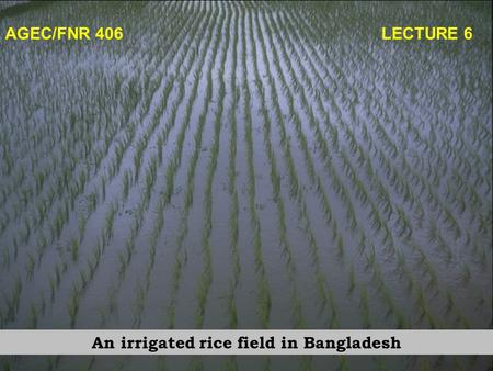 AGEC/FNR 406 LECTURE 6 An irrigated rice field in Bangladesh.