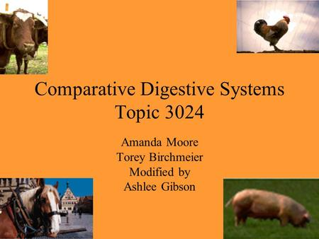 Comparative Digestive Systems Topic 3024 Amanda Moore Torey Birchmeier Modified by Ashlee Gibson.