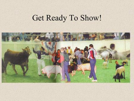 Get Ready To Show!. So What's the Purpose Anyway? To present an animal in a manner that will show off the best qualities of that animal. To downplay any.