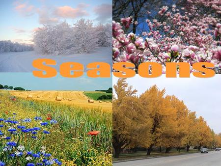 There are four seasons in a year: Spring, Summer, Autumn Winter.