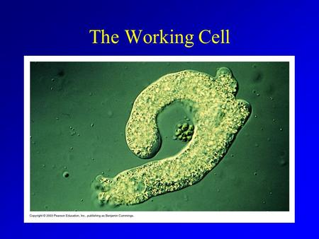 The Working Cell. Energy Living cells use energy All life is dependant on energy conversions Energy = capacity to do work Kinetic energy Potential energy.