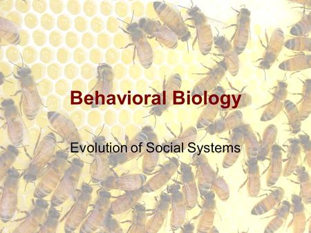 Behavioral Biology Evolution of Social Systems. Societies Groups of organisms of the same species which cooperate to exist.