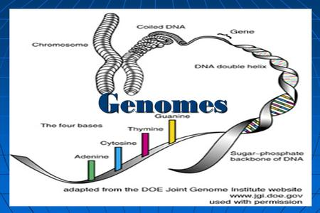 a description of a genome as the complete collection of an organisms genetic material Quite a few other bacteria, such as e coli, may have 4,000 to 5,000 genes   genome the complete set of genes or genetic material in a cell or.