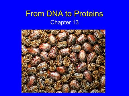 From DNA to Proteins Chapter 13.