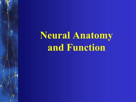 Neural Anatomy and Function. NERVOUS SYSTEMS Central nervous system Peripheral nervous system.