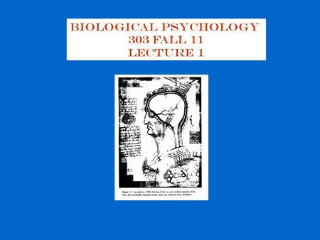 Biological Psychology 303 Fall 11 Lecture 1. Biopsychology: the study of the biological basis of behavior the study of :  Neuroanatomy: structure of.