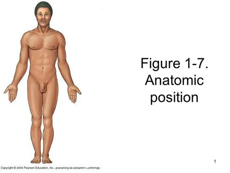 1 Figure 1-7. Anatomic position. 2 Fig. 1-9. Anatomic Position. What do you think the arrows are showing?