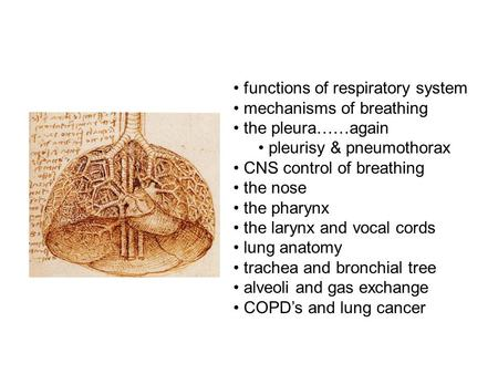 Functions of respiratory system mechanisms of breathing the pleura……again pleurisy & pneumothorax CNS control of breathing the nose the pharynx the larynx.