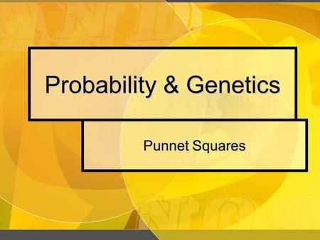Probability & Genetics Punnet Squares Probability Probability Probability The likelihood that a particular event will occur. The likelihood that a particular.