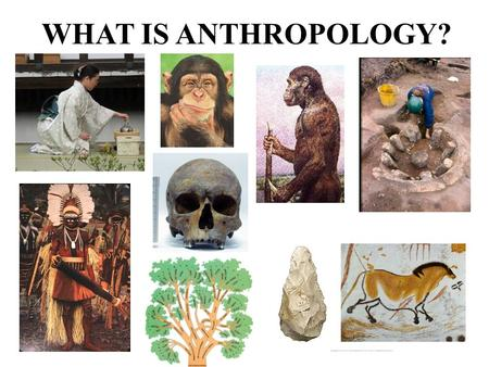 WHAT IS ANTHROPOLOGY?. From the Greek  `anthropo' human beings',  `logos' originally meaning word, reason, speech or account and later doctrine, theory.