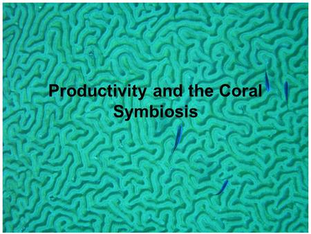 Productivity and the Coral Symbiosis