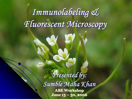 Immunolabeling & Fluorescent Microscopy Presented by: Sumble Maha Khan ABE Workshop June 13 – 30, 2006.