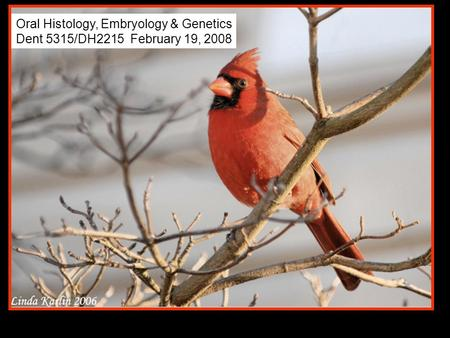 Oral Histology, Embryology & Genetics
