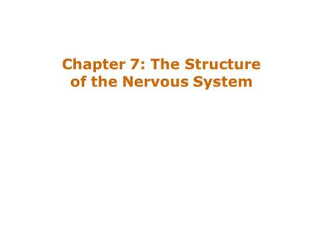 Chapter 7: The Structure of the Nervous System.