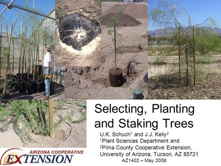 Selecting, Planting and Staking Trees U.K. Schuch 1 and J.J. Kelly 2 1 Plant Sciences Department and 2 Pima County Cooperative Extension, University of.
