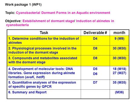 Work package 1 (WP1) Topic: Cyanobacterial Dormant Forms in an Aquatic environment Objective: Establishment of dormant stage/ Induction of akinetes in.