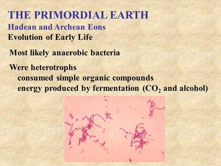 THE PRIMORDIAL EARTH Hadean and Archean Eons Evolution of Early Life Most likely anaerobic bacteria Were heterotrophs consumed simple organic compounds.