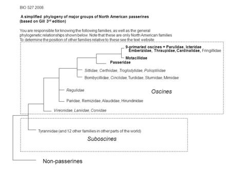 BIO 527 2008 A simplified phylogeny of major groups of North American passerines (based on Gill 3 rd edition) You are responsible for knowing the following.