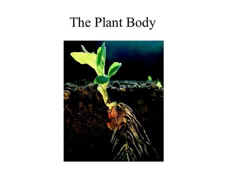 The Plant Body.