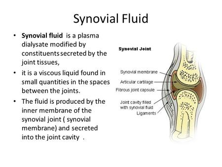 Synovial Fluid Synovial fluid is a plasma dialysate modified by constituents secreted by the joint tissues, it is a viscous liquid found in small quantities.
