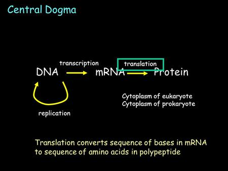 Central Dogma Cytoplasm of eukaryote Cytoplasm of prokaryote DNAmRNA Protein transcription translation replication Translation converts sequence of bases.