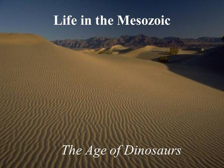 "Life in the Mesozoic The Age of Dinosaurs. Mesozoic Life Highlights Oceans repopulated with ""Modern Fauna"" Dominant land animals - Dinosaurs First Flowering."