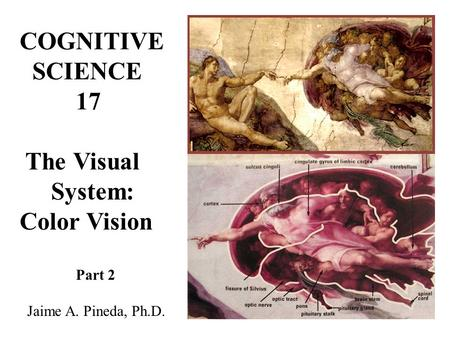 COGNITIVE SCIENCE 17 The Visual System: Color Vision Part 2 Jaime A. Pineda, Ph.D.