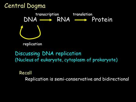 Discussing DNA replication (Nucleus of eukaryote, cytoplasm of prokaryote) Central Dogma DNARNA Protein transcriptiontranslation replication Replication.