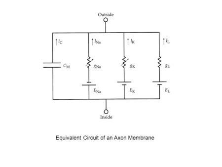 Equivalent Circuit of an Axon Membrane