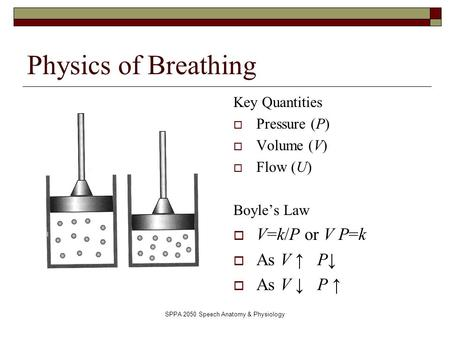 SPPA 2050 Speech Anatomy & Physiology Physics of Breathing Key Quantities  Pressure (P)  Volume (V)  Flow (U) Boyle's Law  V=k/P or V P=k  As V ↑