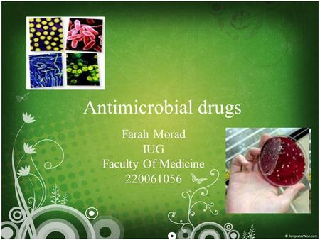 Antimicrobial drugs Farah Morad IUG Faculty Of Medicine 220061056.