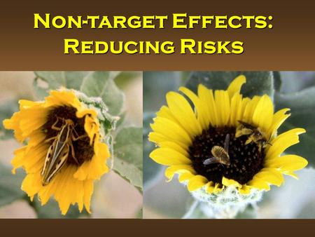 Non-target Effects: Reducing Risks. Risks for Different Groups of Non-target Organisms Source: Food and Agriculture Organization of the UN, 2003.