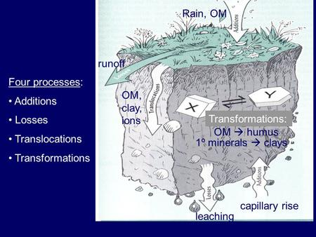 OM  humus 1º minerals  clays OM, clay, ions Transformations: runoff leaching Rain, OM capillary rise Four processes: Additions Losses Translocations.