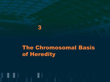 The Chromosomal Basis of Heredity 3. Human Chromosomes Humans have 46 chromosomes organized as 23 pairs which are homologous because each pair contains.