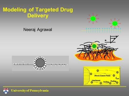 University of Pennsylvania Modeling of Targeted Drug Delivery Neeraj Agrawal.