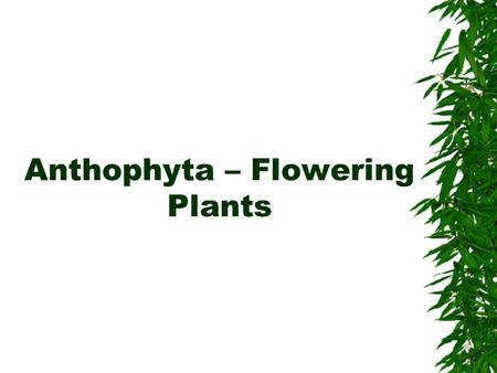 Anthophyta – Flowering Plants
