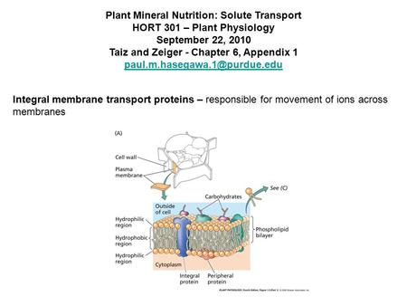 Plant Mineral Nutrition: Solute Transport HORT 301 – Plant Physiology September 22, 2010 Taiz and Zeiger - Chapter 6, Appendix 1