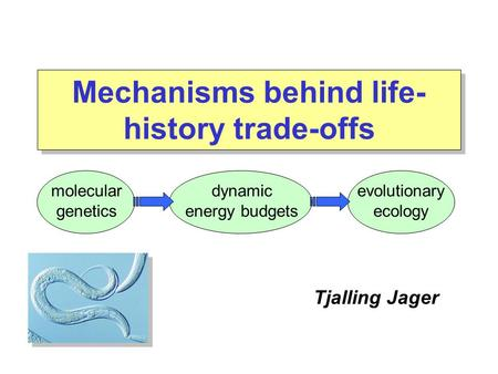 Tjalling Jager molecular genetics evolutionary ecology dynamic energy budgets Mechanisms behind life- history trade-offs.