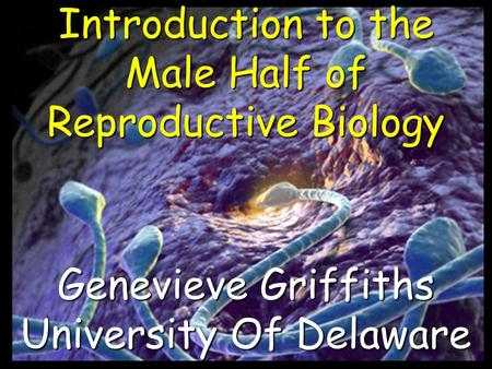Introduction to the Male Half of Reproductive Biology Genevieve Griffiths University Of Delaware.
