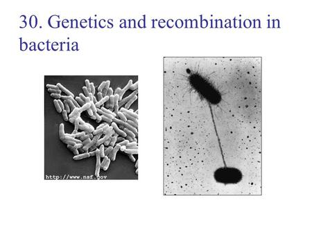 30. Genetics and recombination in bacteria. Lecture Outline 11/16/05 Replication in bacteria Types of recombination in bacteria –Transduction by phage.