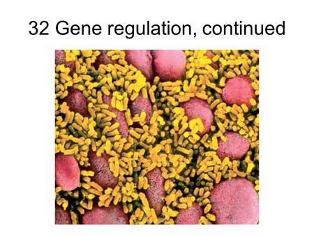 32 Gene regulation, continued. Lecture Outline 11/21/05 Review the operon concept –Repressible operons (e.g. trp) –Inducible operons (e.g. lac) Positive.
