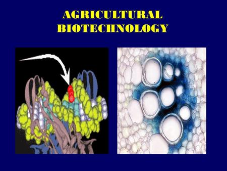 AGRICULTURAL BIOTECHNOLOGY. Biotechnology: A collection of technologies.