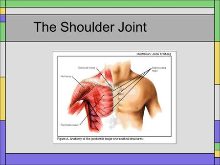 The Shoulder Joint.