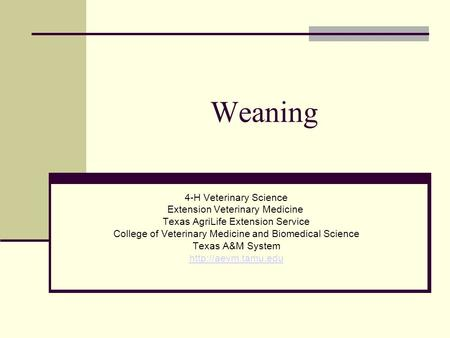 Weaning 4-H Veterinary Science Extension Veterinary Medicine Texas AgriLife Extension Service College of Veterinary Medicine and Biomedical Science Texas.