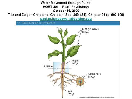 Water Movement through Plants HORT 301 – Plant Physiology October 16, 2009 Taiz and Zeiger, Chapter 4, Chapter 18 (p. 449-455), Chapter 23 (p. 603-609)