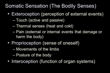 Somatic Sensation (The Bodily Senses) Exteroception (perception of external events) –Touch (active and passive) –Thermal senses (heat and cold) –Pain (external.