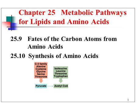1 25.9 Fates of the Carbon Atoms from Amino Acids 25.10 Synthesis of Amino Acids Chapter 25 Metabolic Pathways for Lipids and Amino Acids.