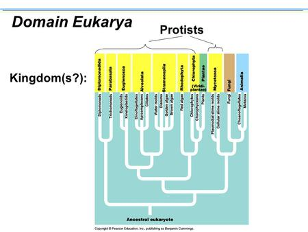 Domain Eukarya Kingdom(s?): Protists Themes in the Evolution of Protists n Larger Cell Size Larger cells make possible the evolution of diverse structures.