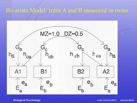 Bivariate Model: traits A and B measured in twins cbca.
