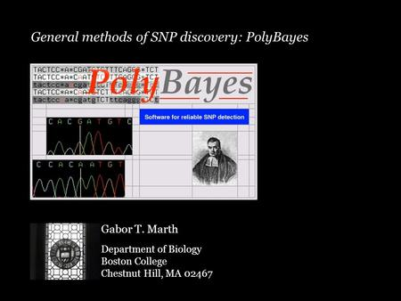 General methods of SNP discovery: PolyBayes Gabor T. Marth Department of Biology Boston College Chestnut Hill, MA 02467.